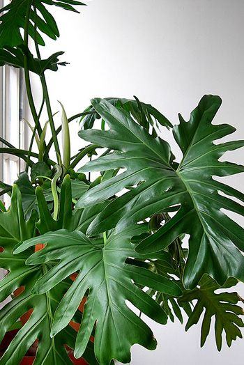 indoor plants with names - Identifying House Plants By Leaves