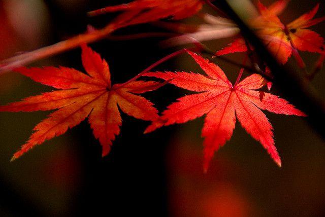 shiny red by takay, via Flickr