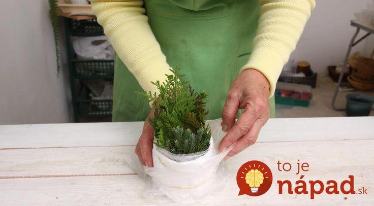 Ak sa chystáte rozmnožovať ihličnany počas jesene, vhodné sú na to najmä tuje, cyprušteky a borievky.