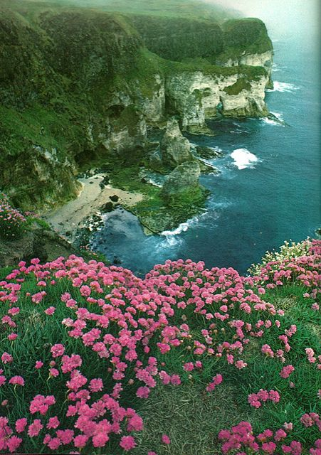 Ireland// sea thrift are really hardy plants... put a couple in that Irish looking rock wall or make a saucer planter accented with some beach glass, beach pebbles or sea shells