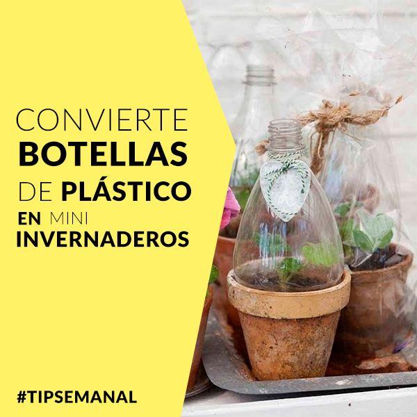 Convierte las botellas en mini invernaderos www - Mini invernadero casero ...
