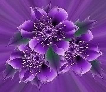Purple Flowers Photo:  This Photo was uploaded by NBHoney. Find other Purple Flowers pictures and photos or upload your own with Photobucket free image a...