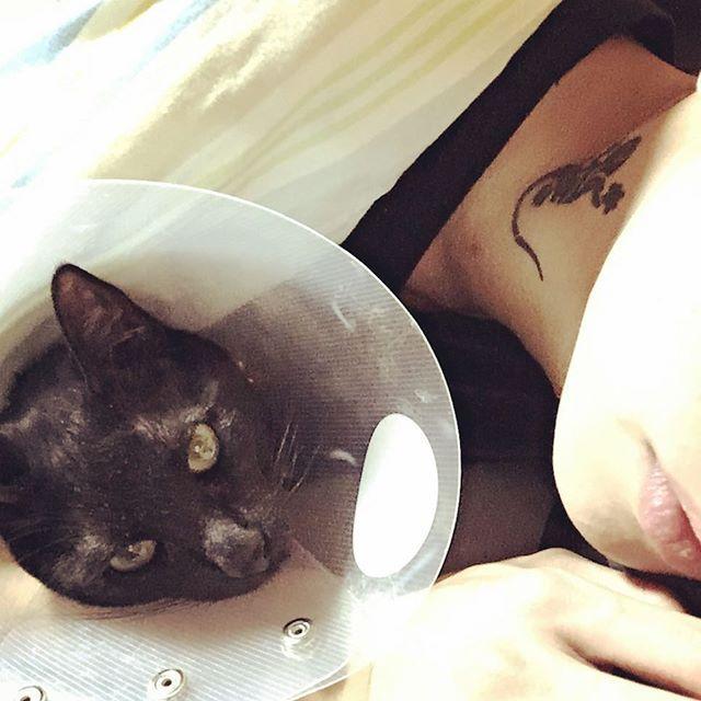 去勢手術がおわってエリザベスカラーなうの愛猫🐈 手術終わってからずっと甘えた😎😎 #ペット#家族#family#❤️#愛猫#猫#cat#🐈 #黒猫#Blackcat#真っ黒#去勢手術終了  #エリザベスカラー#もう少し我慢 #tattoo#刺青#首筋#家守#蜥蜴#🦎