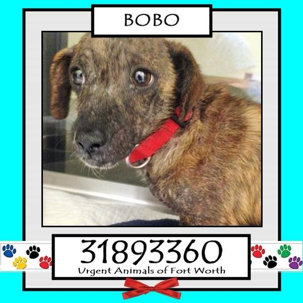 BOBO / DAWSON located in Fort Worth, TX, to be destroyed 12/05/2016