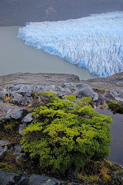 Grey Glacier, Torres del Paine National Park, Patagonia, Chile - Explore the World with Travel Nerd Nici, one Country at a Time. http://TravelNerdNici.com