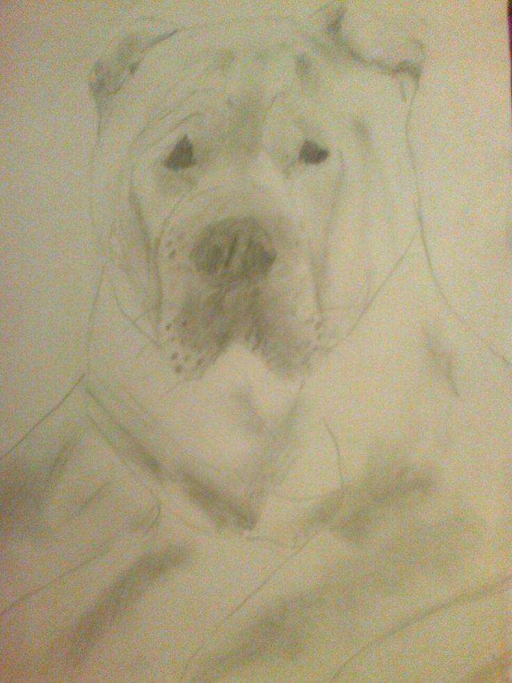 A dog...