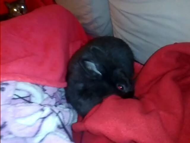 "120 Gostos, 5 Comentários - Bruna Raposo (@brunahh_s2) no Instagram: ""Os animais adoram me!!! #animals #cat #bunny #likesforlikes #likeforfollow #intatags4likes #coment…"""