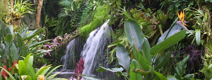 Vlindertuin - Vlinders   Tropische: tuin, planten, vissen   Phalaenopsis