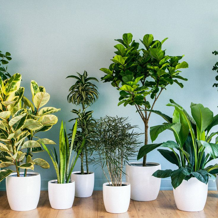 9 Super Chic Houseplants