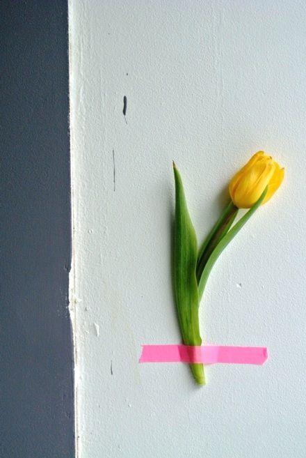 Tulip via Little Helsinki