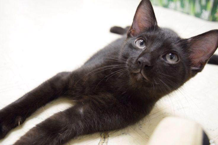Cute little Hellcat #nikond5300