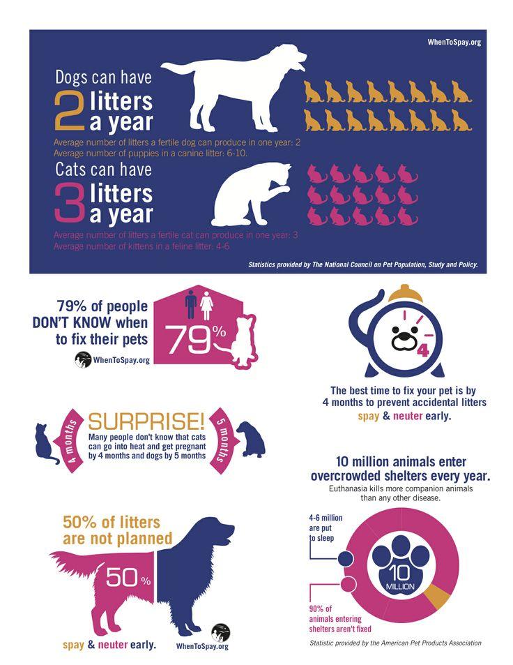 Benefits Of Dog Castration Uk