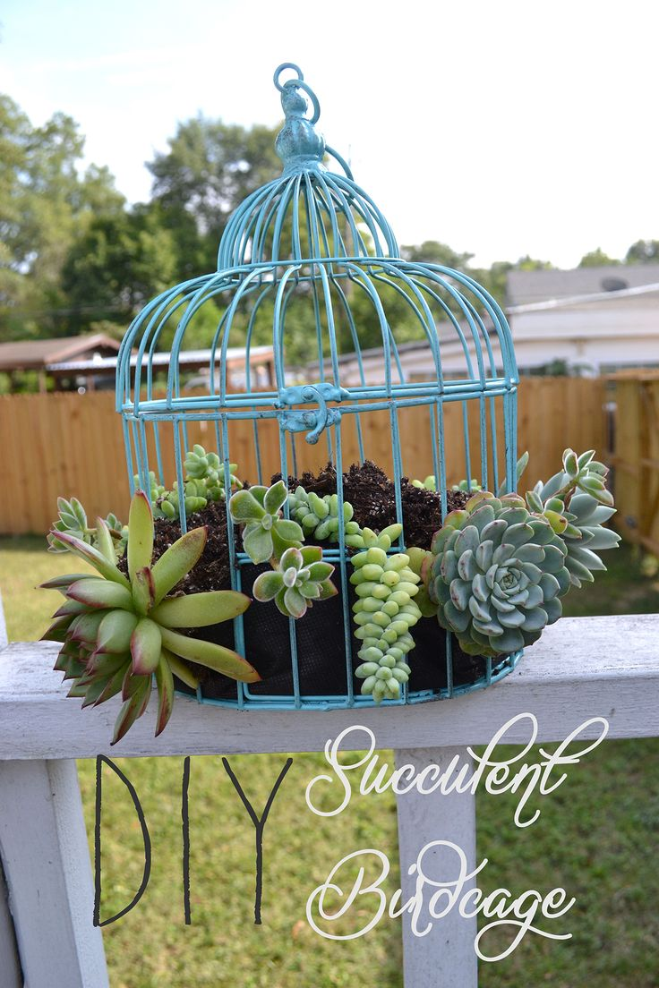 best 25+ birdcage planter ideas on pinterest | succulent display
