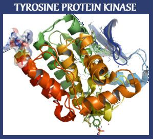 The report provides comprehensive information on the Tyrosine Protein Kinase CSK targeted therapeutics, complete with analysis by indications, stage of development and mechanism of action.http://www.jsbmarketresearch.com/healthcare-medical/r-tyrosine-protein-kinase-csk-c-src-kinase-or-protein-tyrosine-kinase-cyl-or-csk-or-ec-27102-pipeline-review-h2-2016-362538