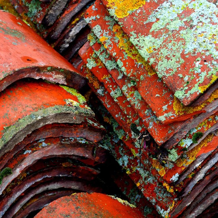 Lichen covered roof tiles