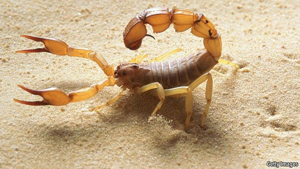 north African desert scorpion, Androctonus australis, is a hardy creature. Most animals that live in deserts dig burrows to protect themselves...