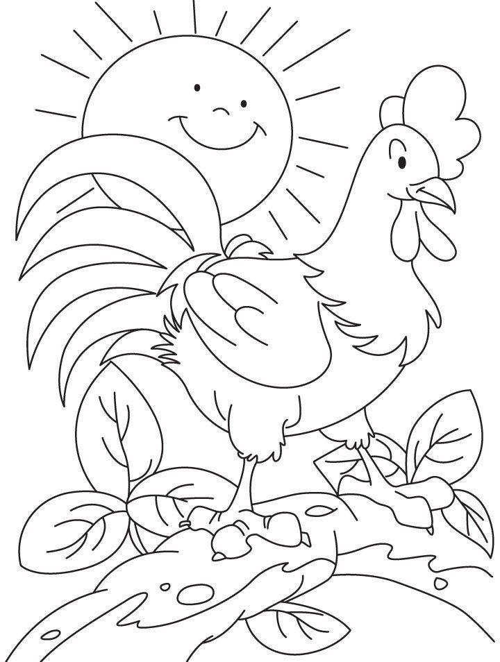 Mewarnai Gambar Ayam Jago