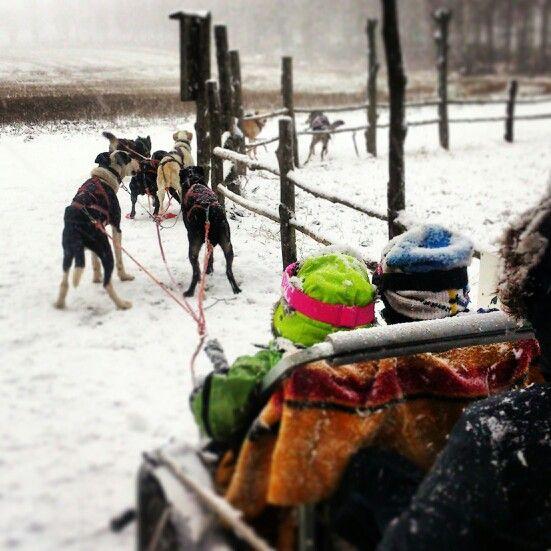Förväntansfullt... Nu bär det av med Hundspann på småländska för hela familjen  Www.turochnatur.se