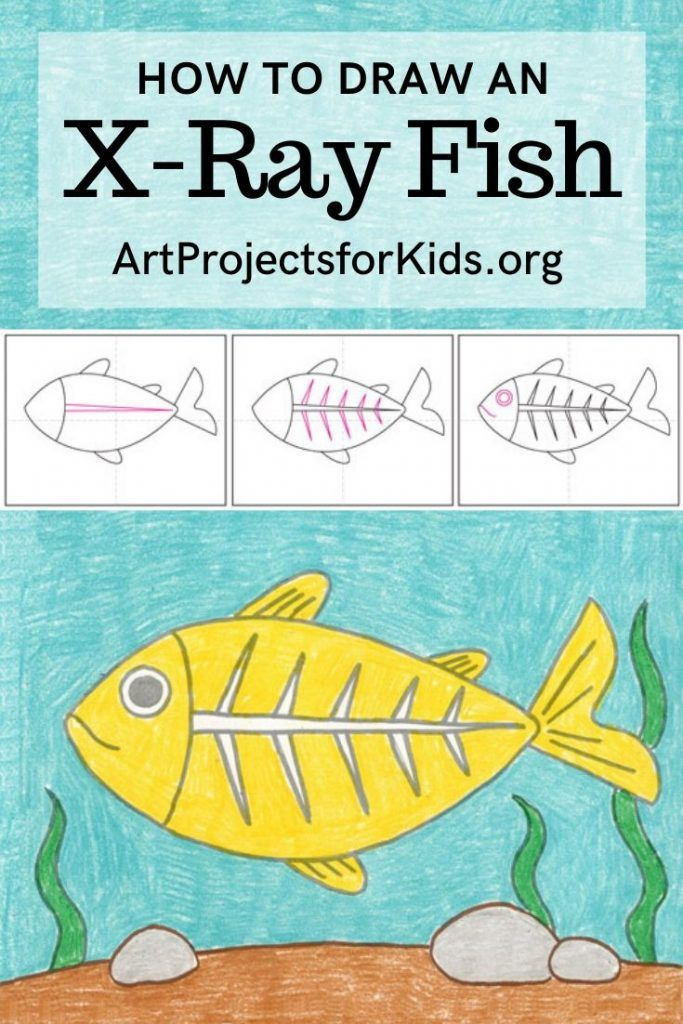 Draw An X Ray Fish Art Projects For Kids In 2020 Kids Art Projects Directed Drawing Kindergarten Fish Crafts Kids