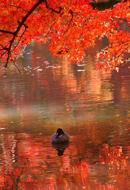 feels like autumn...
