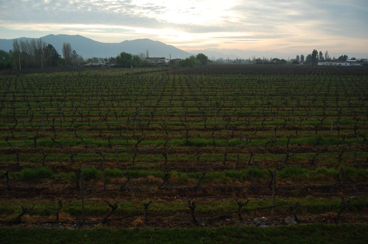 Sunset in the wineries at Colchagua valley. Eureka Travel #SouthAmerica