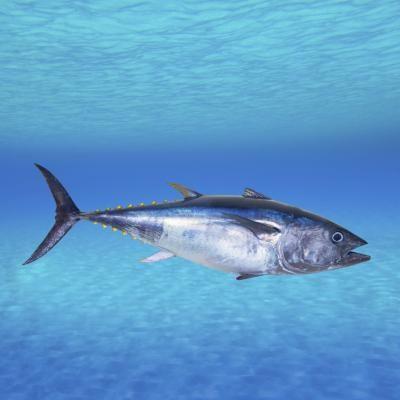 How to Make a Simple, Healthy Mayo-Free Tuna Sandwich