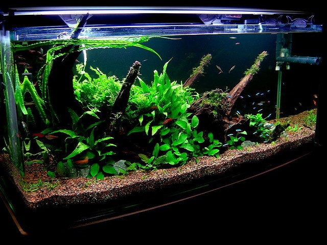 Pin by rihamah omar on fluval aquariums tropical fish for Fish tank cloudy