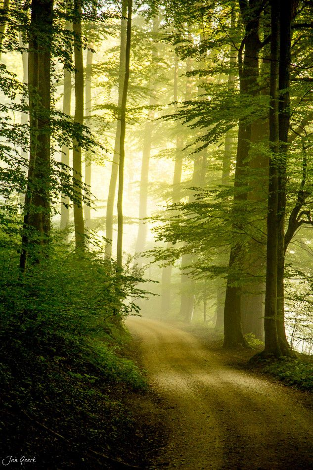 Road to the light - Morning myst in the woods. Just love…
