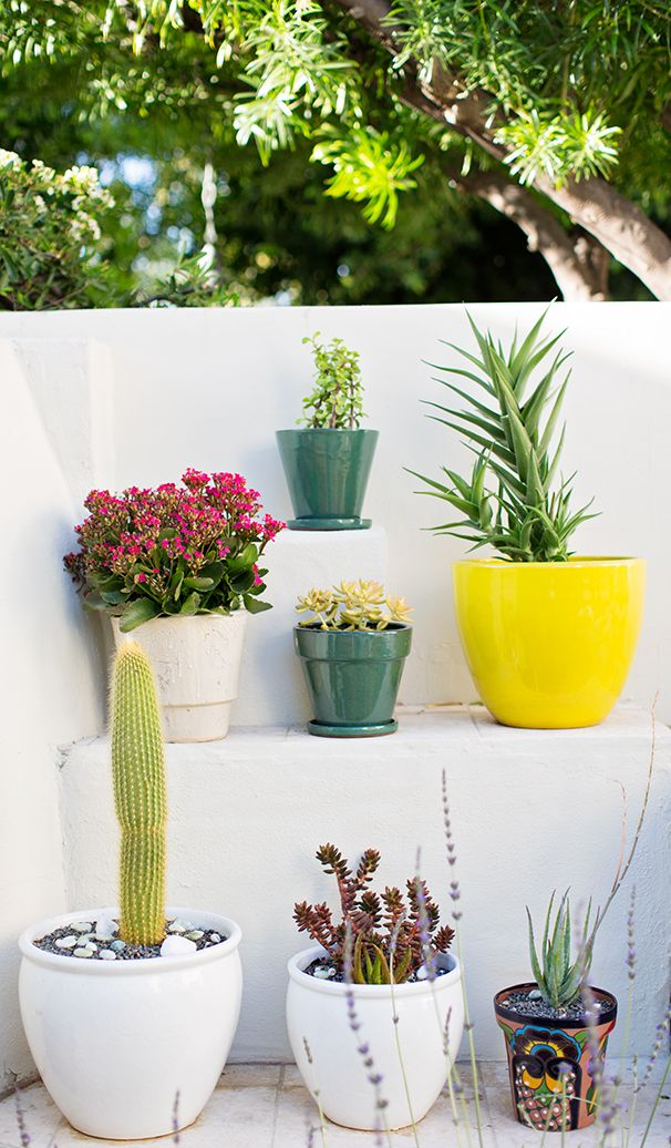 1000 images about succalant plants on pinterest for Cactus in pots ideas