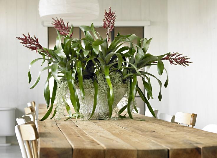 Bromeliads. Natural StylesIndoor PlantsHouseplantsBowlsTerracesLive