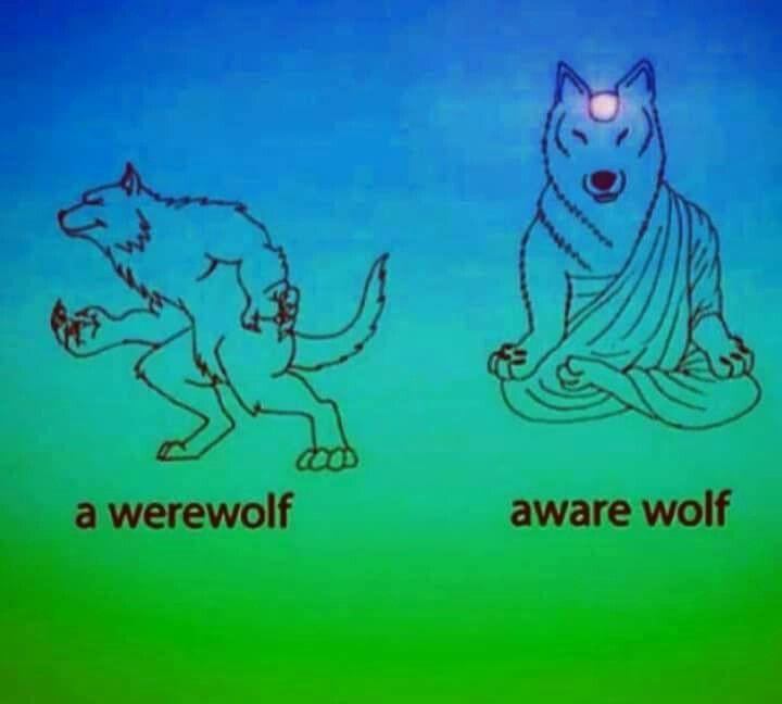 Aware Wolf.