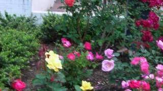 curso gratis de Jardineria - YouTube