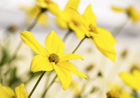 Ezek a legillatosabb növények, amiket a balkonra tehetsz: gyönyörködj a képekben is! | femina.hu