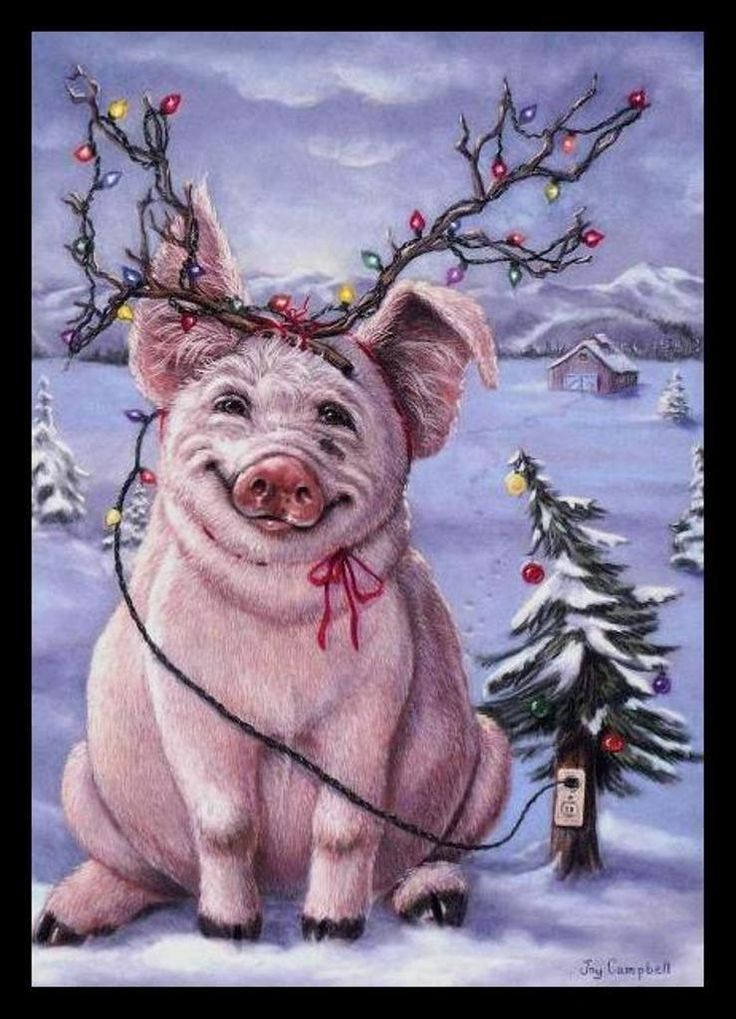 Ebay 3d Wallpaper Photo 303 Gc Joy Campbell Pig Unused Christmas Greeting Card