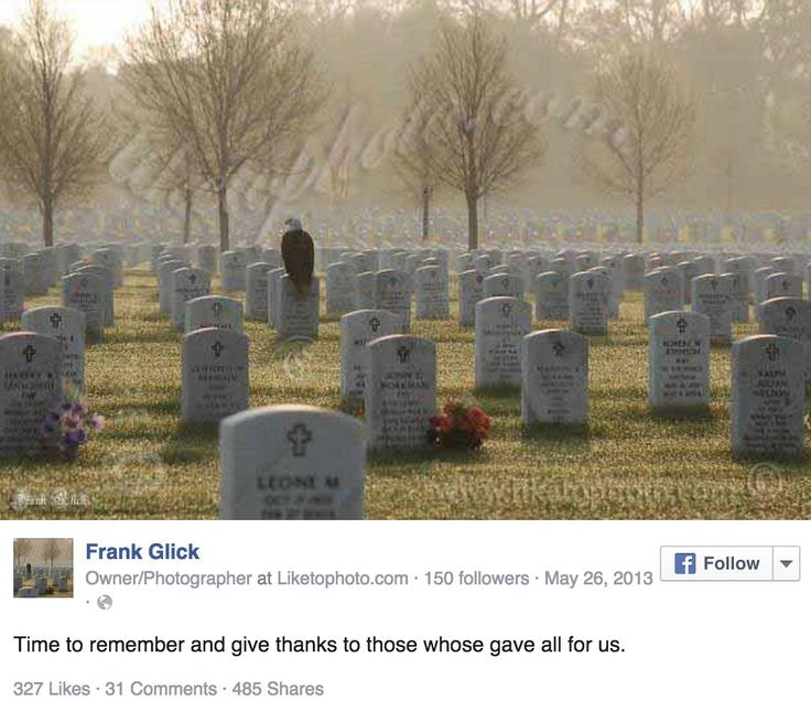 Photographer Captures Eagle Perched Amongst Veterans' Headstones At Cemetery (Photos)