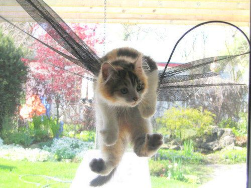 lily wanted back into the house - no matter what. Come follow me at http://www.pinterest.com/cattreehouse/