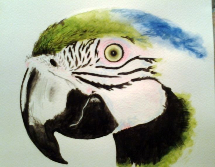 Papagáj festve