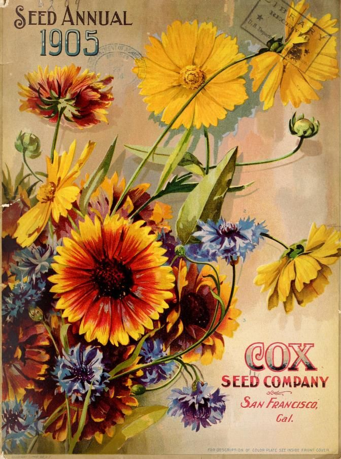 Cover of 'Seed Annual 1905.' Cox Seed Company. San Francisco. Cal. archive.org
