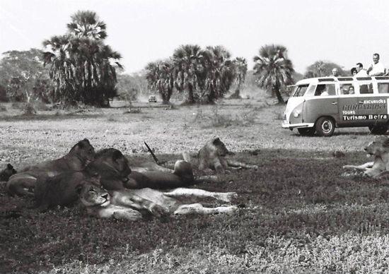 Gorongosa National Park, Mozambique BelAfrique - Your Personal Travel Planner www.belafrique.co.za