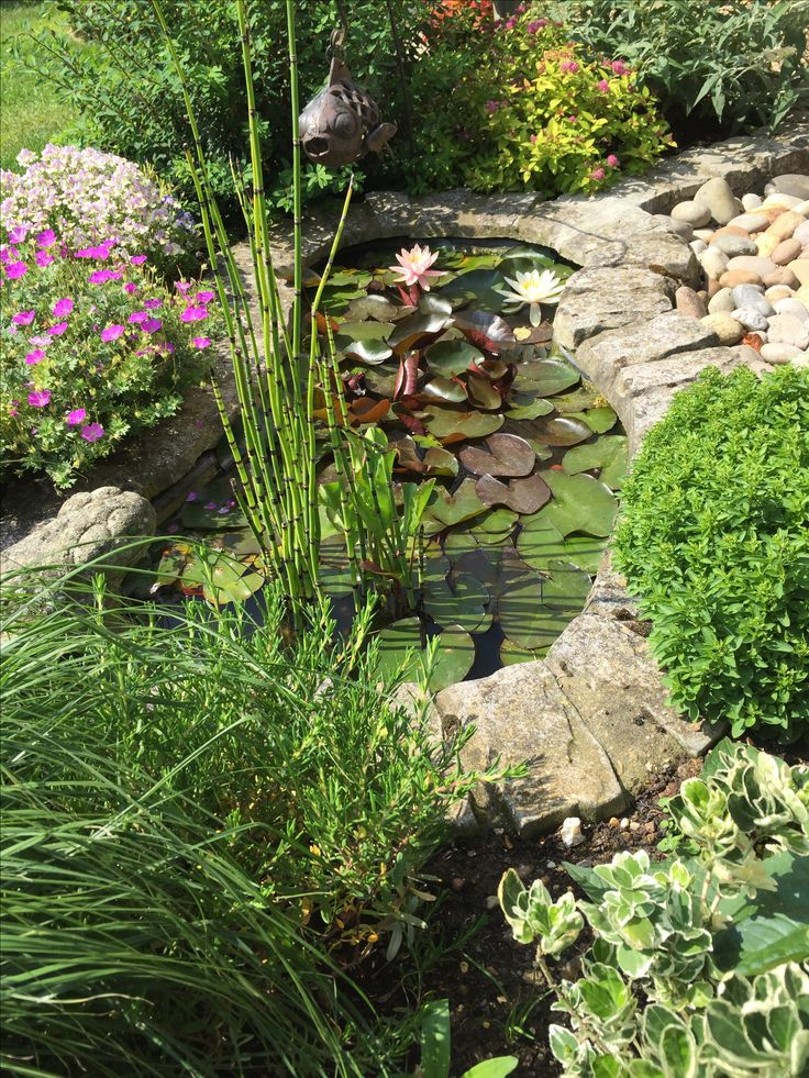 Our small frog pond garden pinterest pond and gardens for Small frog pond ideas