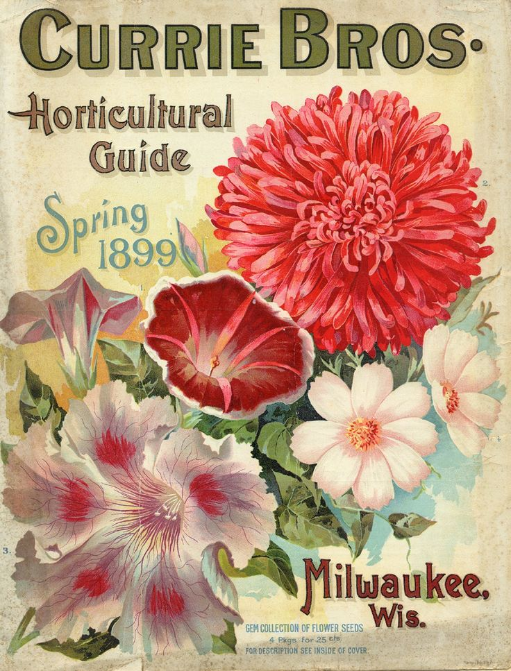 Vintage Seed Catalog  http://www.americangardening.net/blog1/wp-content/uploads/2010/08/Currie-dahlia-cover.jpg