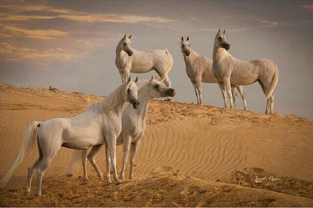 خيول Horses