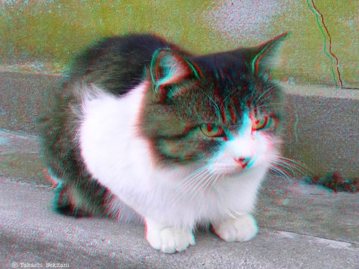 CREATURE - Kitty (3D - anaglyph)