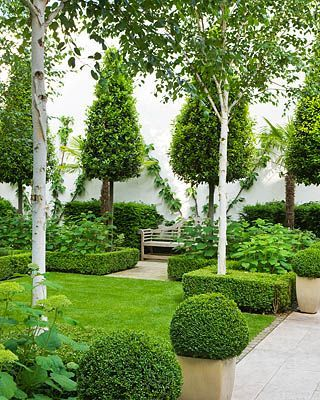 love the use of white birch trees in formal gardens / repinned on Toby Designs
