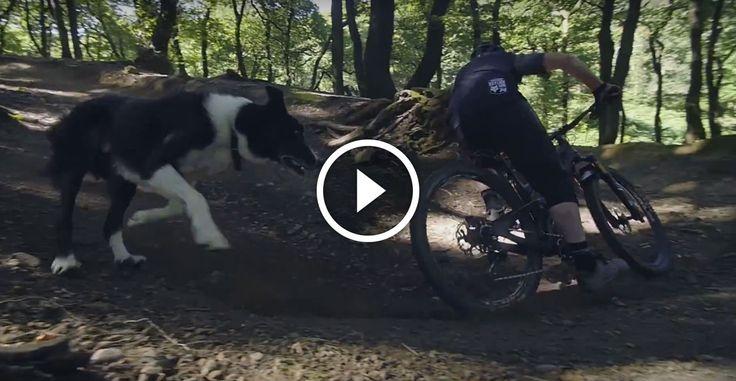 """Смотреть: """"Старожилы"""" – человек и собака все же рельса!. Singletracks Горный Велосипед Новости."""