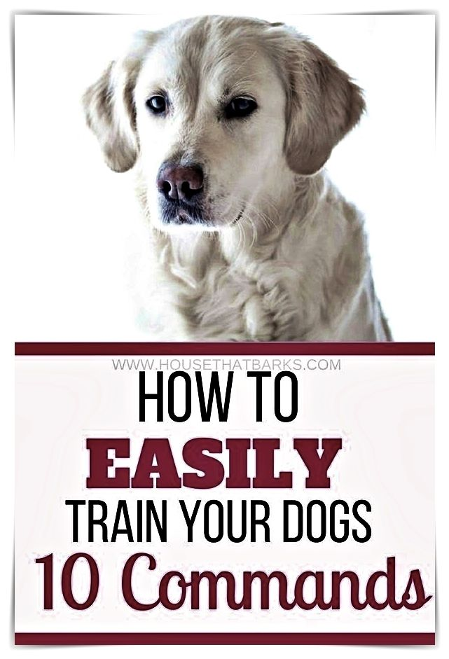 Dog Training Guide If You Re Going With Dogs Take All Of His