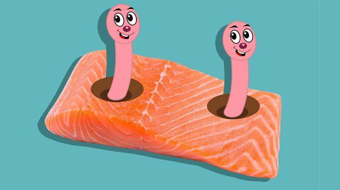 OMG! Hati-hati Saat Mengonsumsi Ikan Salmon, Bisa-bisa Temukan Cacing Jenis Ini!