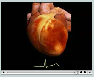 Animation: A model of a beating heart from the Auckland Bioengineering Institute, University of Auckland shows the contraction of the ventricle three-dimensionally and graphically.