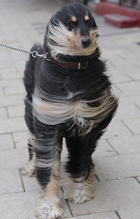 "devouement-farouche: "" awwww-cute: "" Bit windy (Source: http://ift.tt/2c45llE) "" Mit drei Wetter Taft wäre das nicht passiert  "" *lach*"