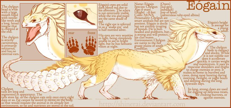 Eogain Ref by Shinerai.deviantart.com on @deviantART